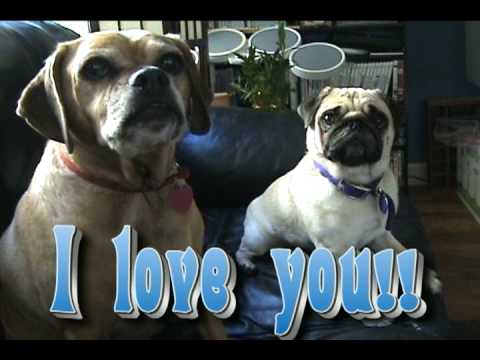 pug says i love you talking pug dog says i love you youtube 3733