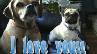 Talking Pug Dog Says I Love You