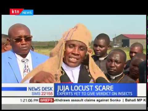 Fear in Juja as swarm of \'locust\' raid Kigwe farm few kilometers away from Juja town