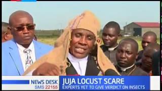 Fear in Juja as swarm of 'locust' raid Kigwe farm few kilometers away from Juja town