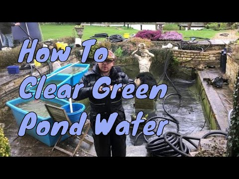 How To Clear Green Pond Water - Fast | Clear Pond Water