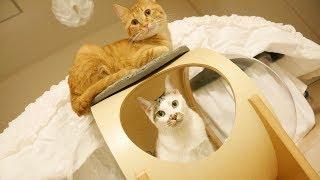様々な角度から猫を愛でることのできる猫の宇宙船がかわいすぎる
