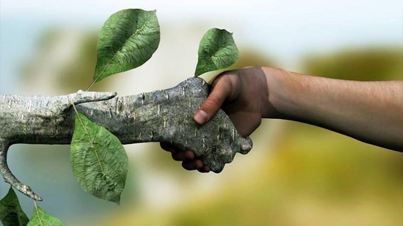 Как НЕ погубить растение! Частые причины потери растений!