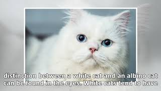 The Difference Between an Albino Cat and a White Cat | Catster