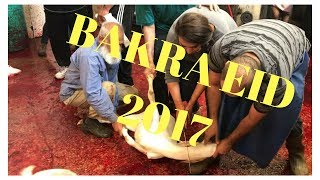 FIRST GIRL IN THE HISTORY TO CUT A GOAT!!! (EID 2017)