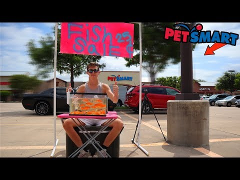 Selling Fish In Front Of PetSmart?! (Fish Stand)