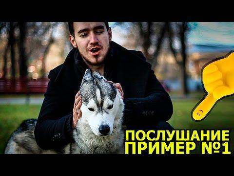 НЕПОСЛУШНАЯ СОБАКА / the naughty dog