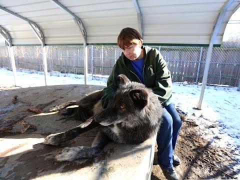 Inside the Wolf Creek Habitat & Sanctuary in Brookville, Ind.