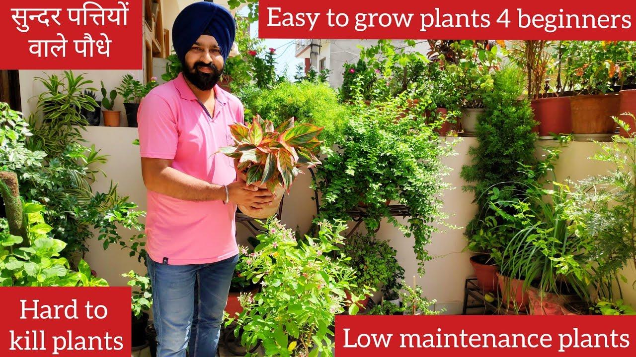 Top 10 hard to kill houseplants names, easy to grow plants, zero maintenance plants, leafy plants