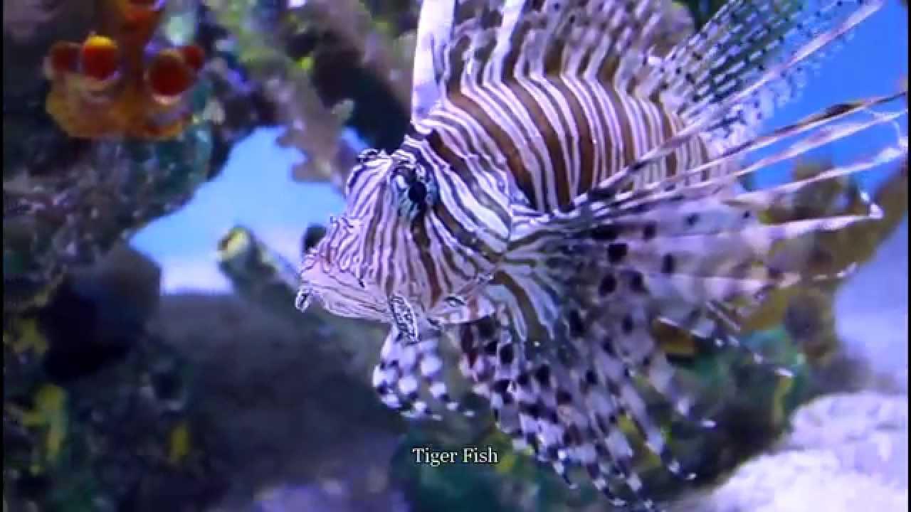 Fish aquarium in niagara falls - Aquarium Of Niagara