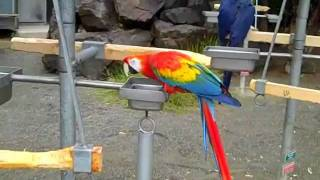 Pretty Birds at Cougar Mountain Zoo