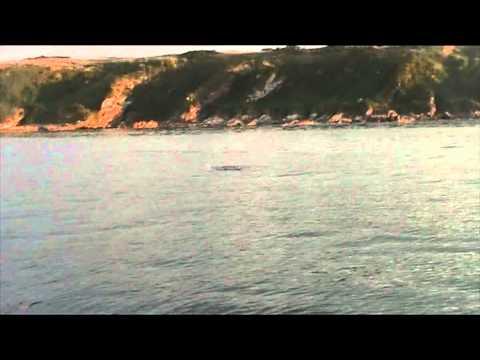 St Andrews Bay Shark 09/09/13