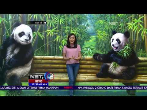 Sensasi Foto Bersama Panda di Amazing Art World Bandung - NET12