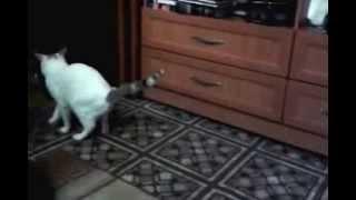 Кот загрыз хозяйку