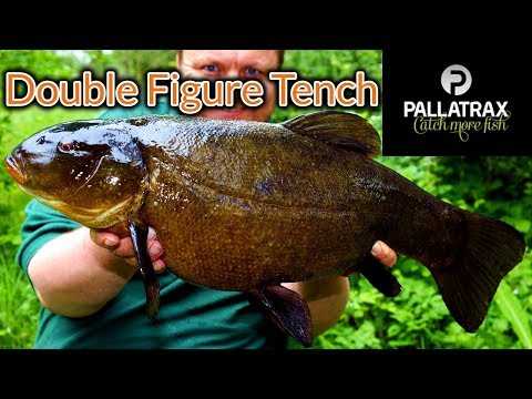 Large Tench! Tench Fishing - Personal Best (Video 141)