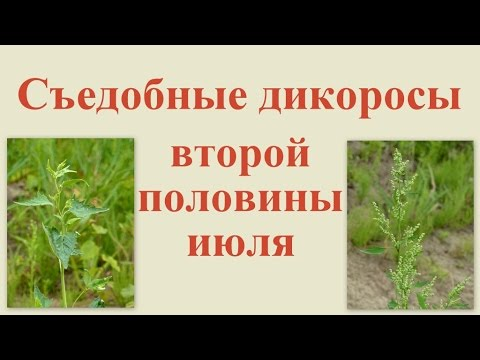 Гравилат » Фазенда-онлайн / сайт о садовых культурах
