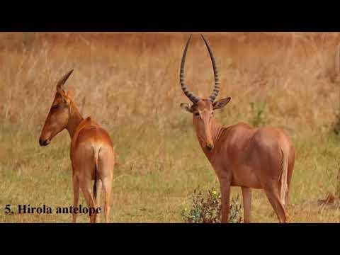 Secrets of Life - Top 10 Evolutionarily Unique Animals