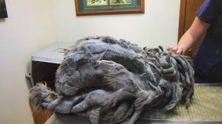 Strange ball of fur dumped outside animal shelter – What was hiding under 4 5 lbs of fur brings me t