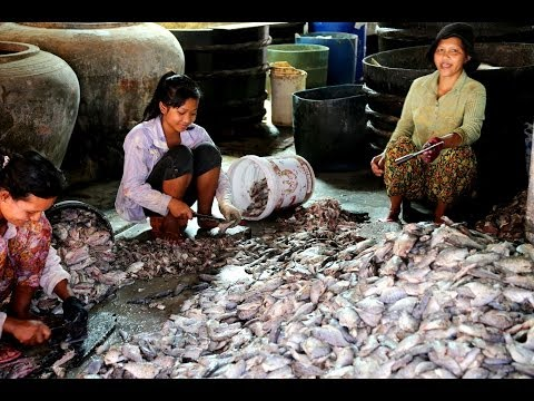 Preparing Fish Paste (prahok) In Psah Prahoc Fish Paste Market In K'dul Village, A Khmer Delicacy