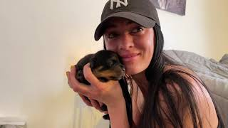 Rottweiler Growing up! 8 Weeks to 8 months / Daily Moments