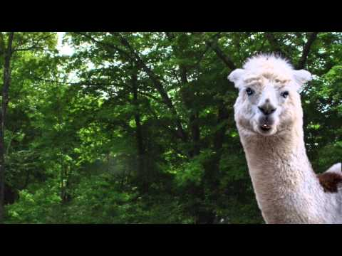 yo mama jokes by funny talking animals videos on youtube