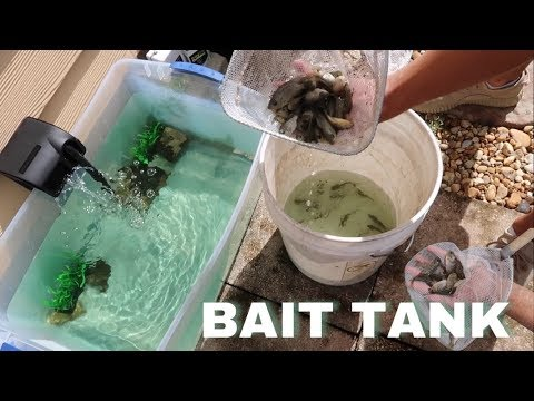 HOMEMADE Backyard BAIT WELL For POND! *First Live Feeding*