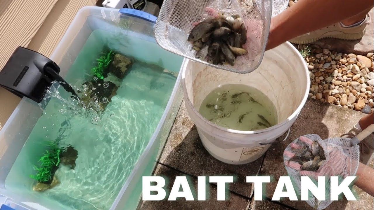 homemade-backyard-bait-well-for-pond-first-live-feeding