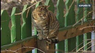 Необычный праздник: 1 марта - Международный день кошек