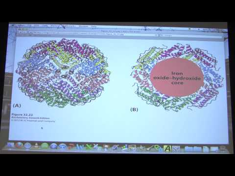 #51 Biochemistry Gene Expression III Lecture for Kevin Ahern's BB 451/551