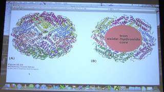 #51 Biochemistry Gene Expression III Lecture for Kevin Ahern&#39s BB 451551