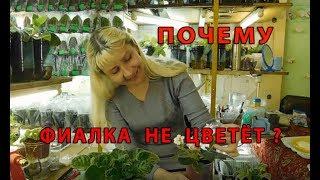 ПОЧЕМУ ФИАЛКА НЕ ЦВЕТЕТ !!! Как заставить фиалочку цвести букетно.