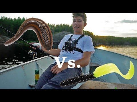 Live Bait Vs. Artificial - Let the Fish Decide (Camping)