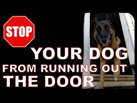 How to STOP Your DOG From Running OUT The Door - WAIT Command - Dog Training Video