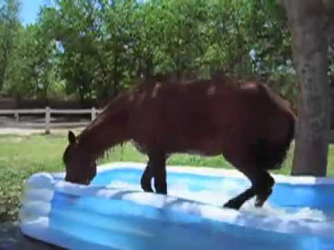 Un cheval se baigne dans une piscine gonflable youtube for Animaux gonflable piscine