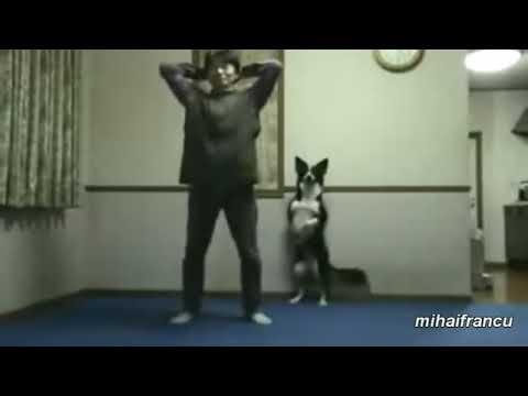 KOMIK Hayvanlar Spor Yapan Sahiplerini Taklit Ediyor 😀😀