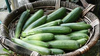 WSZYSTKO o uprawie - Cukinia - uprawa warzyw | infoUprawa