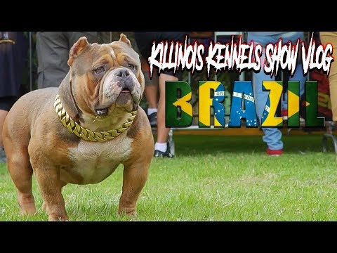 AMERICAN BULLY BRAZIL!!!!!!!!!!!!!! KILLINOIS KENNELS SHOW VLOG #11