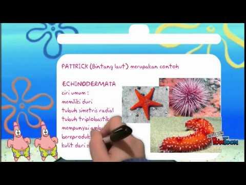 Belajar Invertebrata Bersama Spongebob Youtube