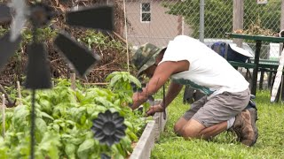 Urban farming classes move gardeners to farmers