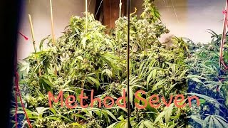 Method Seven 7 unboxing BEST GROW GLASSES?! uv protection
