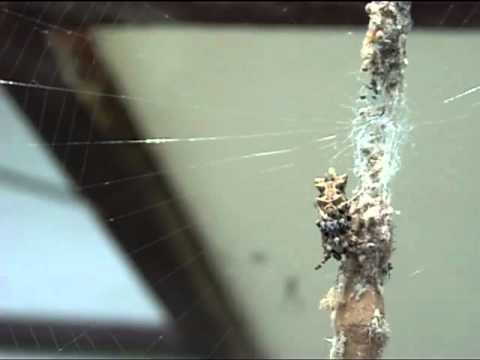 What tangled webs they weave: Spiders learn best way to detect prey