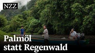 Kampf um den Urwald: «Es ist seltsam, alles im Geschäft zu kaufen»