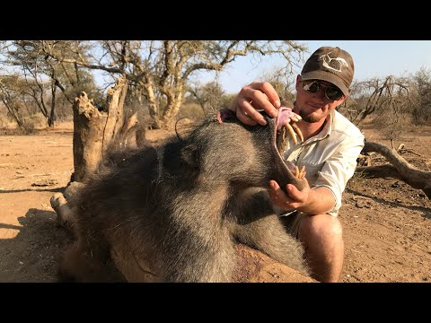 BOWHUNTING DANGEROUS BABOONS!!