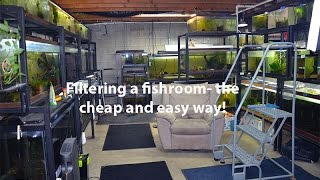 How I filter my fishroom the cheap and easy way!