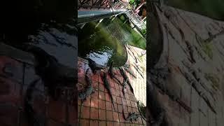 Водопады Янгбей с Саша-тур. Видео в чате туристов.