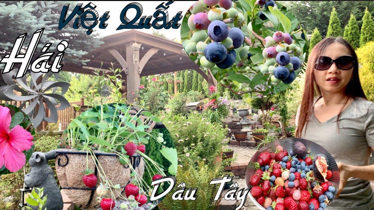 Thu Hoạch Dâu Tây, Việt Quất, Cherry, Sung Và Xem Vườn Rau Và Cây Cảnh Ở Mỹ - Taylor Recipes