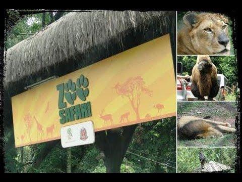 ZOO Safari  de São Paulo - Video e Fotos - 2014