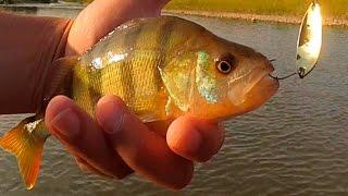 Ловля окуня на уловистую блесну с Алиэкспресс. Рыбалка на реке