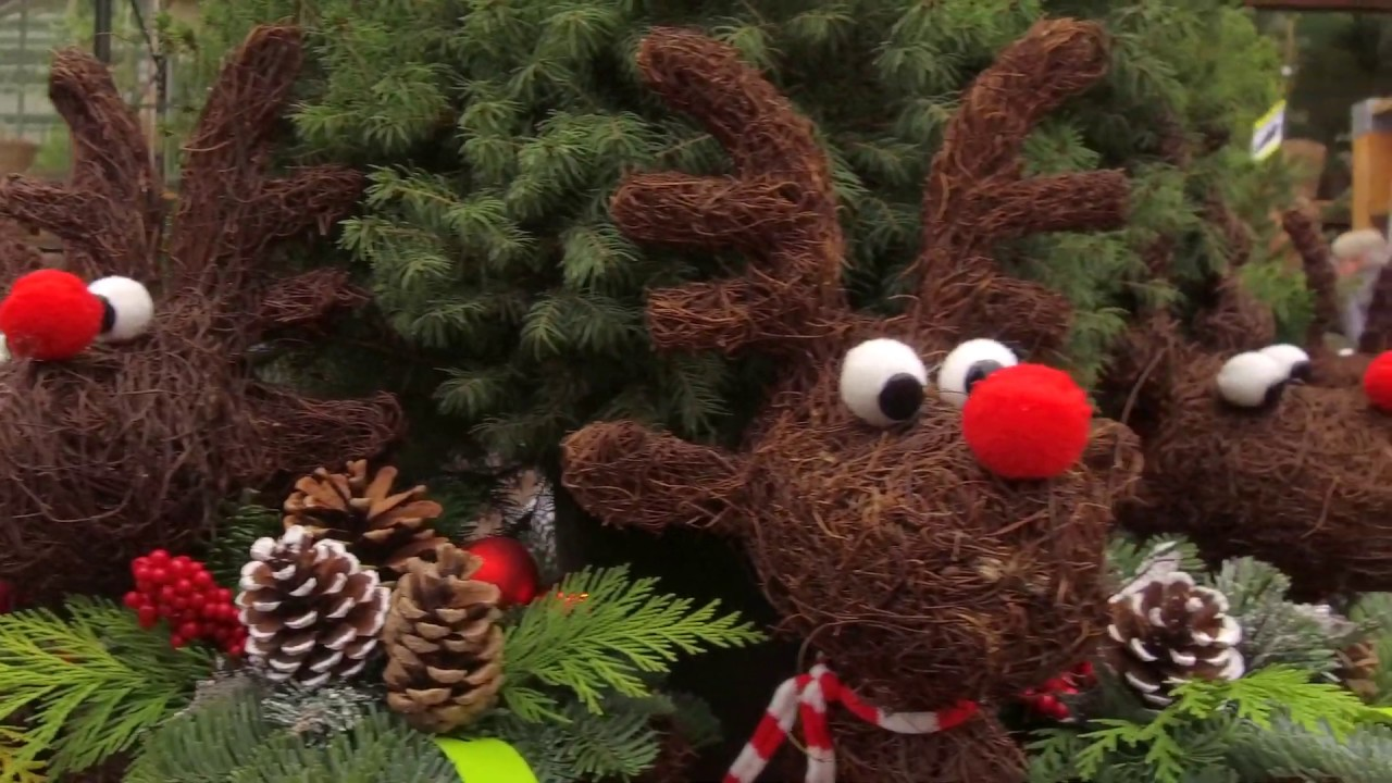 Intratuin duiven kerstshow 2018 youtube for Intra tuin duiven