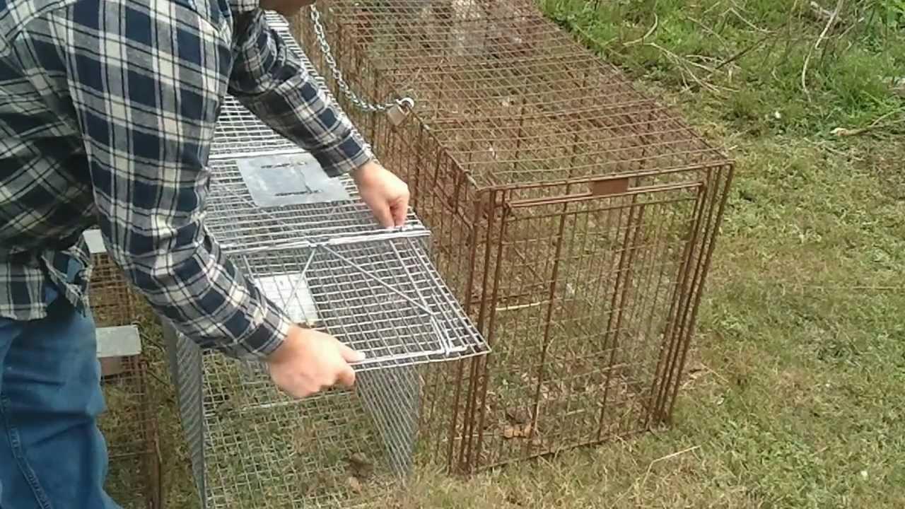 Types of live animal traps part 1 large traps youtube - Trap meubilair kind ...